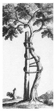 Crooked_Tree_AAOS_Symbol
